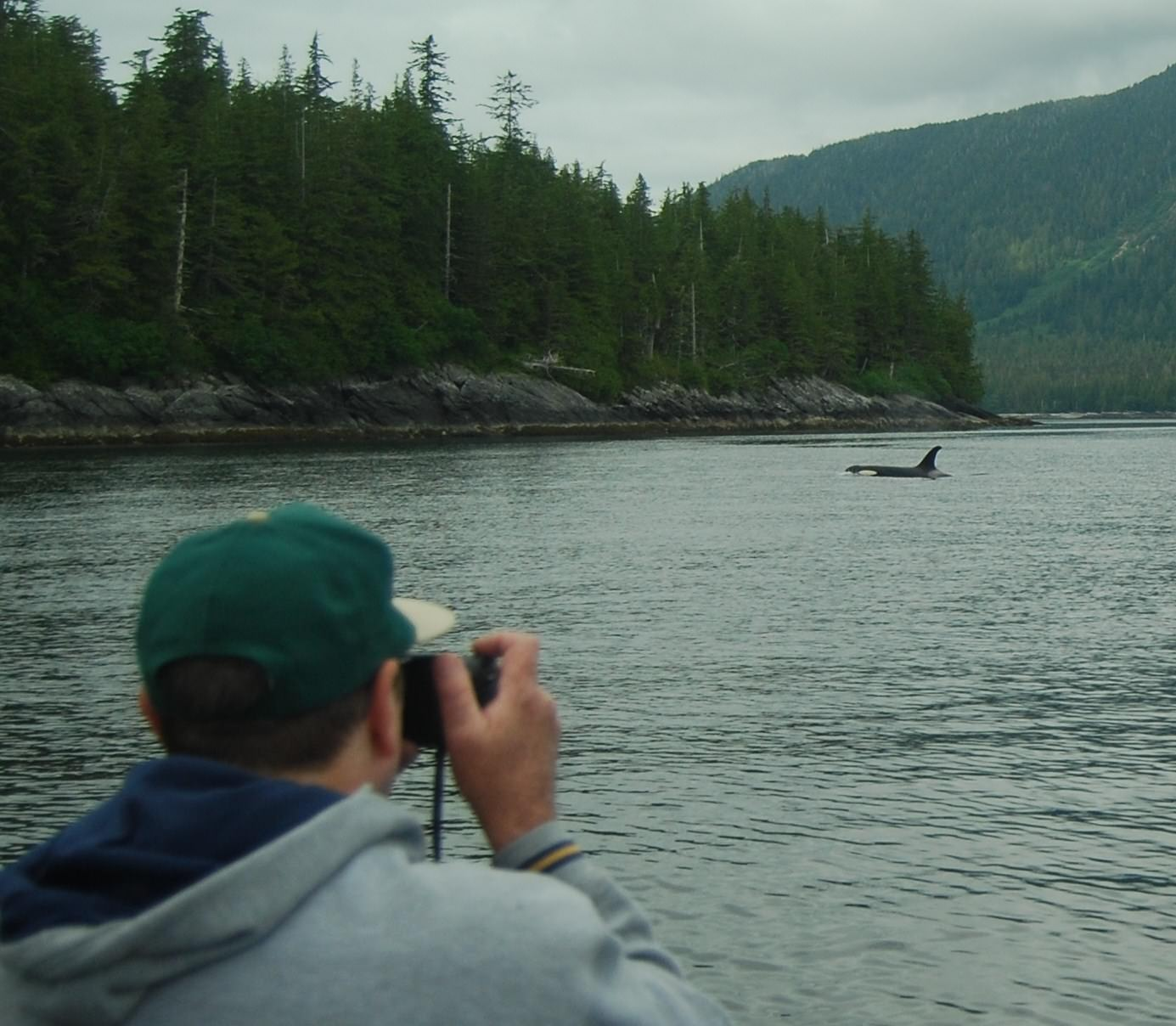 See Killer Whales in Ketchikan