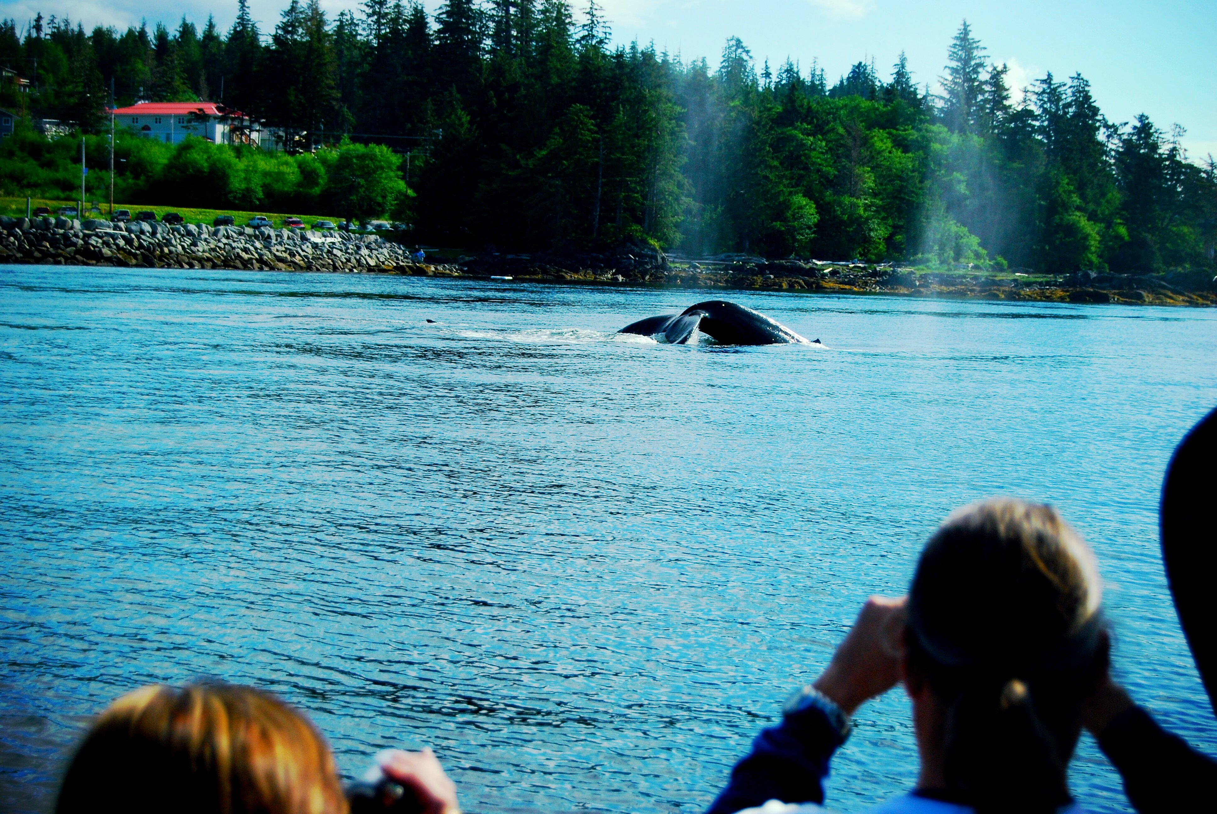Viewing Humpback Whales in Icy Straits
