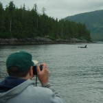 Wild Killer Whales in Hoonah