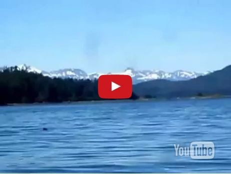 Humpback Orca Whale Watching Hoonah Alaska